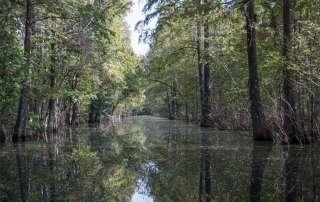 Mindfulness: Inner River